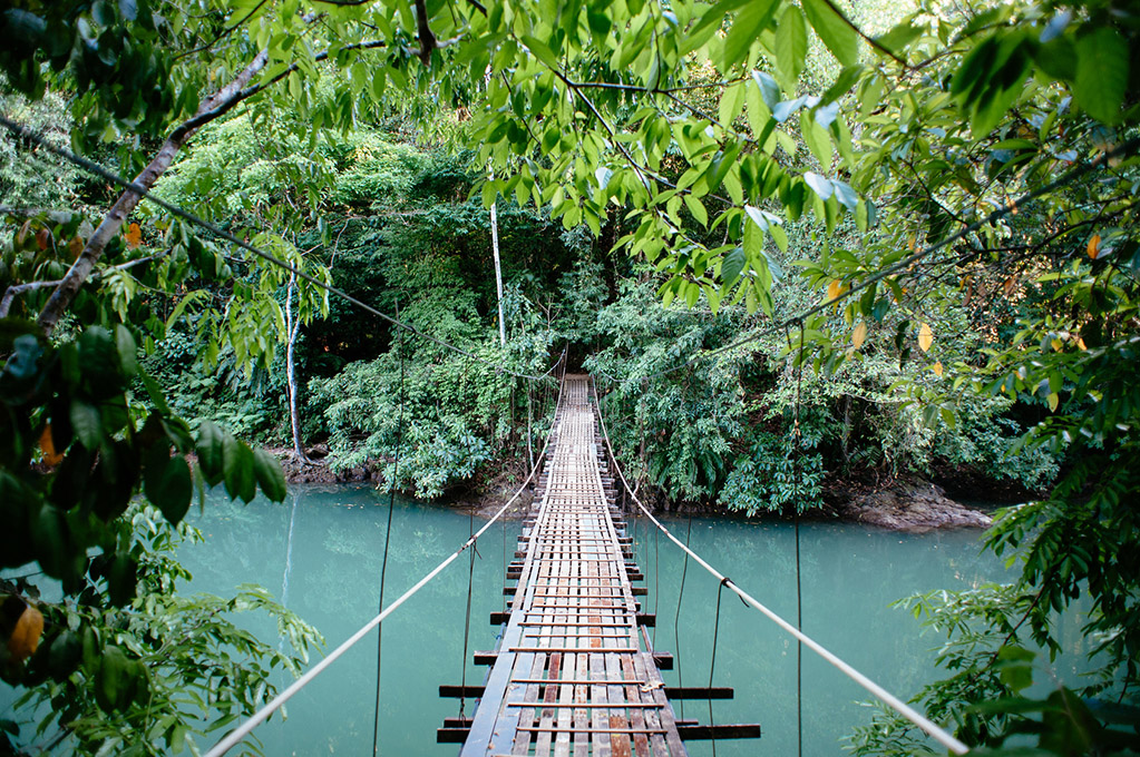 A suspension bridge crosses a tropical river.